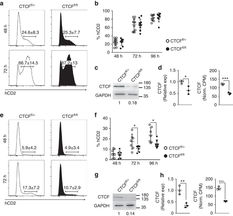 Activation context determines the requirement of activated B cells for CTCF. ( a ) hCD2 expression in spleen B cells from CTCF fl/+ and CTCF fl/fl mice after 48 and 72 h of LPS/IL4 stimulation. ( b ) Quantification of hCD2 + cells from CTCF fl/+ and CTCF fl/fl mice after 48, 72 and 96 h of LPS/IL4 stimulation. n (CTCF fl/+ )=11; n (CTCF fl/fl )=10. ( c ) Western blot analysis of CTCF in isolated hCD2 + B cells from CTCF fl/+ and CTCF fl/fl mice after 72 h of LPS/IL4 stimulation. CTCF amount normalized to GAPDH is shown underneath. ( d ) CTCF mRNA quantification by qRT-PCR ( P =0.0283) and by RNA-seq ( P =0.0003). ( e ) hCD2 expression in spleen B cells from CTCF fl/+ and CTCF fl/fl mice after 48 and 72 h of stimulation in CD3/CD28 T–B co-cultures. Histograms show hCD2 expression gated on B220+ B cells. ( f ) Quantification of hCD2 + cells from CTCF fl/+ and CTCF fl/fl mice after 48, 72 and 96 h of CD3/CD28 T-cell stimulation. Percentages of hCD2+ cells gated on B220+ B cells are shown. n (CTCF fl/+ )=7; n (CTCF fl/fl )=7. P (72 h)=0.0438; P (96 h)=0.0187. ( g ) Western blot analysis of CTCF in isolated hCD2 + B cells from CTCF fl/+ and CTCF fl/fl mice after 72 h of stimulation with CD3/CD28 and T cells. CTCF amount normalized to GAPDH is shown underneath. ( h ) mRNA CTCF quantification by qRT-PCR ( P =0.0059) and by RNA-seq ( P =0.0002). Mean values (a and e) ±s.d. are shown. CTCF fl/+ , white dots; CTCF fl/fl ; black dots. Statistical analysis was done with two-tailed unpaired Student's t -test.