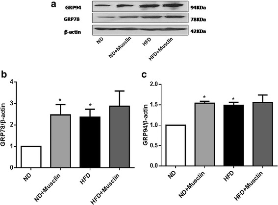 Effect of musclin on ERS markers in rat soleus muscles. a : Western blot analysis of the protein levels of the 78-kDa glucose-regulated protein (GRP78) and the 94-kDa GRP94 in soleus muscles. b : Quantitative analysis of GRP78 protein expression. c : Quantitative analysis of GRP94 protein expression. Values are the mean ± standard error of the mean; ( n = 3); * P