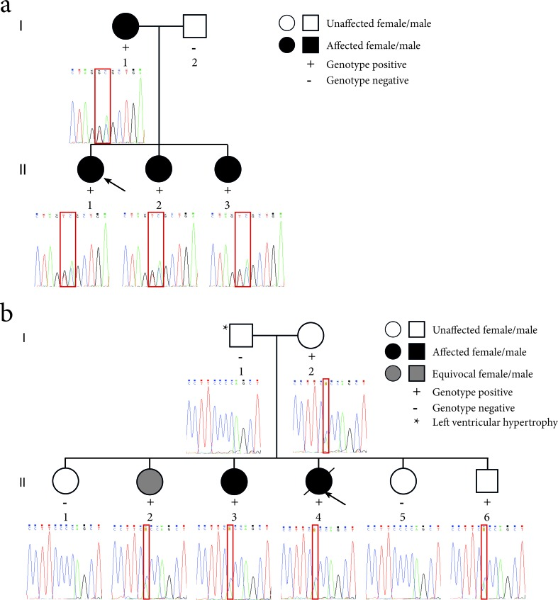 Pedigrees of the LQTS families and sequence electropherograms. (a) Family 1 segregates the c.781_782delinsTC mutation in the KCNQ1 gene. The proband (II-1) is indicated by the black arrow. (b) Family 2 segregates the c.2437-5C > A mutation in the SCN5A gene. The proband (II-4) is indicated by the black arrow. The location of the mutation in the sequence electropherograms is indicated by a red box.