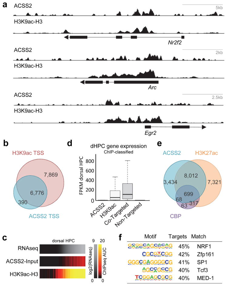 ACSS2 ChIP-seq localization is linked to histone acetylation in vivo in mouse hippocampus (HPC). (a) ChIP-seq for ACSS2 and H3K9ac in mouse HPC. Track-views show ACSS2 and H3K9ac for three canonical neuronal genes involved in memory: Arc, Egr2, and Nr2f2 (chr15:74496025–74506488, chr10:66991018–67006804, and chr7:77488549–77516626, respectively). (b) Venn diagram shows in vivo HPC ACSS2 and H3K9ac peaks co-localize with the nearest gene TSS (