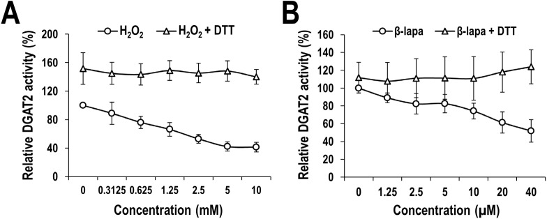 Inhibitory effect of ROS and ROS generator on human DGAT2 catalytic activity. Membrane extracts from human DGAT2-overexpressing Sf9 insect cells were treated with indicated concentrations of H 2 O 2 (A) or β-lapachone (B) in the presence or absence of 20 mM DTT. Human DGAT2 activity was measured by using the conventional extraction-based in vitro assays which are described in detail in the Materials and Methods section. The activities of membrane extracts treated with PBS (instead of H 2 O 2 ) or DMSO (instead of β-lapachone) in the absence of DTT were defined as 100%. The mean values and standard deviations were determined from four independent experiments.