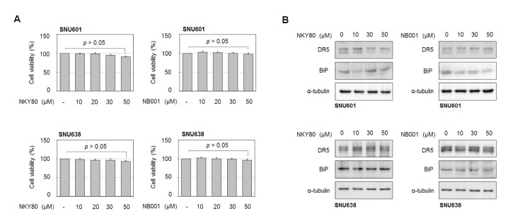 Antitumor effect of MDL-12330A is not linked to inhibition of adenylate cyclase activity. (A) SNU601 and SNU638 cells were exposed to other type of adenylate cyclase inhibitors NKY80 and <t>NB001</t> at indicated concentrations for 24 h, and cell viability was assessed by the EZ-cytox assay. (B) SNU601 and SNU638 cells were incubated with NKY80 or NB001 at 0, 10, 30 and 50 µM for 24 h, and cell lysates were prepared and analyzed by immunoblotting with an antibody to DR5 and BiP.