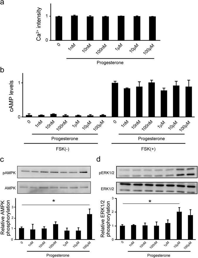 Progesterone promotes ERK phosphorylation via non-GPCR signaling in <t>NGF-induced</t> neuronal PC12 cells. ( a ) Mobilization of [Ca 2+ ] i induced by progesterone was monitored in PC12 cells, and data are presented as relative Ca 2+ intensity. After 2 h in culture, cells were treated with NGF (50 ng/mL) and further cultured in <t>DMEM</t> containing 1% FBS for 24 h. (n = 3). ( b ) cAMP levels in response to progesterone treatment in PC12 cells. After 24 h in culture, NGF-induced PC12 cells pre-cultured with IBMX for 30 min were cultured in the presence of progesterone for 10 min. The cAMP levels in the cells were determined by using a cAMP EIA kit. (n = 3). ( c ) Effects of progesterone on AMPK phosphorylation in PC12 cells. After 24 h of culture, NGF-induced neuronal PC12 cells were further cultured for 3 h in serum-free DMEM. The cells were cultured in the presence of progesterone for 10 min. AMPK and its phosphorylated form were detected by western blotting with specific antibodies. (n = 5) ( d ) Agonistic effects of progesterone on ERK1/2 phosphorylation in PC12 cells. After 24 h of culture, NGF-induced neuronal PC12 cells were further cultured for 3 h in serum-free DMEM. The cells were cultured in the presence of progesterone for 10 min. ERK1/2 and its phosphorylated form were detected by western blotting with specific antibodies. (n = 3). Statistical analysis was performed by using one-way analysis of variance followed by Tukey-Kramer's post hoc test, compared with control. FSK: Forskolin. Results are presented as means ± S.E.M. of independent wells.
