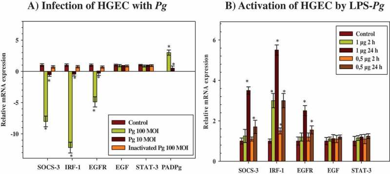 Modulation of the expression of microRNAs (mRNAs) encoding cytokine signaling-3 (SOCS-3), interferon regulatory factor-1 (IRF-1), epidermal growth factor (EGF), EGF-receptor (EGFR), and signal transducers and activators of transcription (STAT-3) in human gingival epithelial cells (HGEC) infected with Porphyromonas gingivalis and activated by its lipopolysaccharide (LPS- Pg ). (a) HGEC were infected for 2 h with P. gingivalis at different multiplicities of infection (MOI; 10 or 100) and with heat-killed P. gingivalis (Ina) at a MOI of 100. Uninfected cells served as control. (b) HGEC were activated for 2 h and 24 h by 0.5 µg/mL and 1 µg/mL of LPS- Pg . Unactivated cells served as controls. In both experiments, total RNA were prepared, and levels of mRNAs encoding SOCS-3, IRF-1, EGF, EGFR, and STAT-3 were determined by quantitative reverse transcription polymerase chain reaction analysis. All results were presented as the quantity relative to β-actin as a reference gene. Differences (*) between a test mRNA and the control HGEC were analyzed with Student's t -test ( p