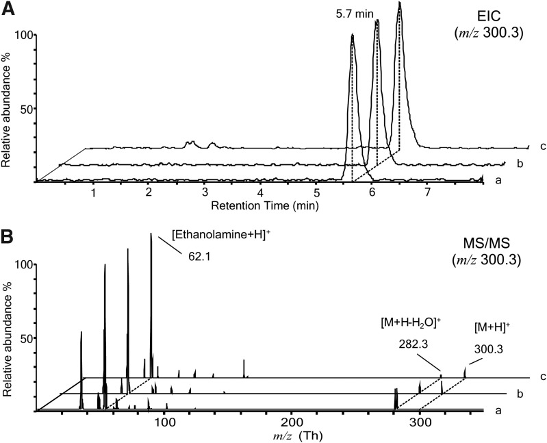 Comparative LC/MS and LC-MS/MS analysis of PEA standard, pipette extract, and foam extract by triple quadrupole mass spectrometer. (A) Positive EIC chromatogram for the m/z 300.3 Th generated from a 5 μL injection of a 1 μM solution of PEA, 5 pmoles on column (trace a), of the pipette extract (trace b) and of the foam extract (trace c); (B) MS/MS analysis in the positive ion mode of the peaks in panel A at RT=5.7 min having m/z 300.3 Th. Panel A shows coeluting peaks at RT=5.7. In panel B the MS/MS spectra show peaks of the protonated PEA molecular ion [M+H] + at m/z =300.3 Th and of its two fragment: the molecular ion arising from the water loss [M+H-H 2 O] + at 282.3 Th and the ethanolamine-positive pseudomolecular ion [Ethanolamine+H] + at 62.1 Th. EIC, extracted ion chromatograms; LC/MS, liquid chromatography–mass spectrometry; MS/MS, tandem mass spectrometry; PEA, palmitoylethanolamide; RT, retention time.