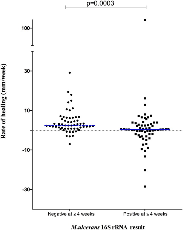 Rate of wound healing at week 4 in Buruli patients with a negative or positive M . ulcerans <t>16S</t> <t>rRNA.</t> Rate of healing was highest in patients where M . ulcerans 16S rRNA was negative at baseline or 4 weeks after starting antibiotic treatment. The rate of healing at week 4 (ROH) was computed in millimeters per week by subtracting the mean diameter of the lesion at week 4 from that at week 0 and dividing this result by 4.
