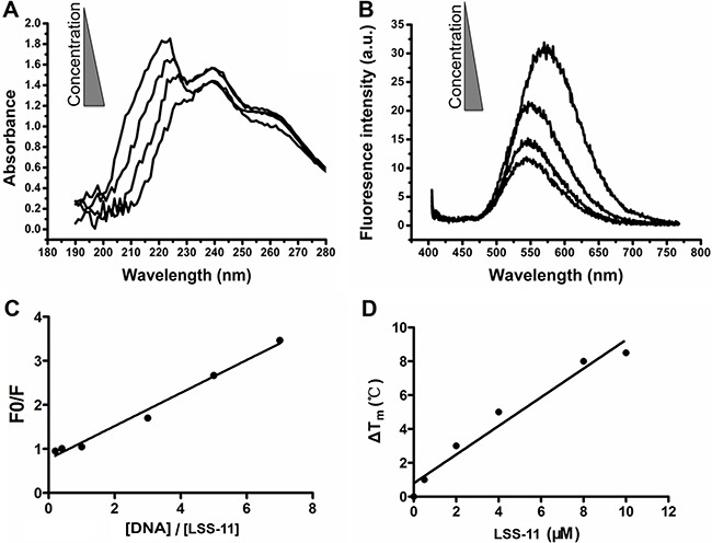 <t>LSS-11</t> interacts with <t>DNA</t> and increases its stability ( A ) UV-Vis spectra and ( B ) fluorescent emission spectra of LSS-11 (50 μM) with increasing concentrations of CT DNA (0 to 200 μM). ( C ) Scatchard plot of the fluorescent intensity of LSS-11 at 570 nm with increasing concentrations of CT DNA [DNA], F stands for fluorescent intensity and F0 refers to fluorescent intensity without CT DNA. ( D ) Increased Tm of a 63 bp DNA fragment in the presence of LSS-11 at indicated concentrations.