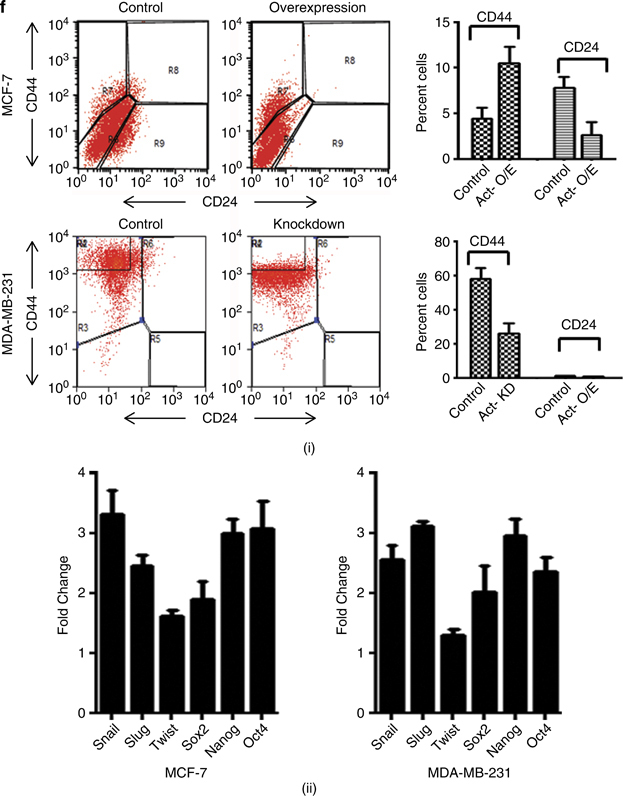 Activin promotes tumorigenicity of breast cancer cells in immunocompromised mice. ( a ) Stable overexpression of activin-A in MCF-7 enhances (i), whereas stable knockdown of activin-A in MDA-MB-231 cells (ii) reduces their tumor-forming ability in nude mice. Shown below are the representative images of the tumors formed s.c. ( b ) Immunohistochemical analysis of MCF-7-overexpressing tumors shows EMT-like changes and higher ki-67 index. ( c ) Treatment of MCF-7 cells with activin-A (i) or overexpression of activin-A in MCF-7 cells (ii) results in increased levels of vascular endothelial growth <t>factor-A</t> <t>(VEGF-A).</t> ( d ) Luciferase reporter assay in HEK 293T cells shows that activin-A regulates VEGF promoter activity. ( e ) Tail vein injection of activin-A-overexpressing MCF-7 cells shows better tumor-forming ability in the livers of nude mice (i). Normal is shown here as the reference from an animal without injection of any cells. The panel below (ii) shows the hematoxylin and eosin (H E) staining of the liver tissue sections. The graph (iii) and (iv) shows number and size of nodules formed in the liver per animal. ( f ) CD44 high/ CD24 low fluorescence-activated cell sorting (FACS) analysis of activin-A-overexpressing or knockdown cells shows that activin-A influences stemness of breast cancer cells (i). Quantitative PCR analysis shows that treatment of MCF-7 or MDA-MB-231 cells with recombinant activin-A induces various markers of stemness (ii).