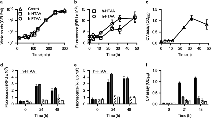 LCO-based fluorometric biofilm quantification in a small-volume 96-well assay. ( a ) Growth curve, shown as viable counts, of strain 3934 wt cultured in the absence (control) and presence of h-HTAA and h-FTAA. ( b and c ) End point quantification of biofilm formed by 3934 wt at indicated times based on ( b ) fluorescence from cultures grown in the presence of h-HTAA and h-FTAA and ( c ) the crystal violet assay. ( d – f ) Quantification of biofilm formed at 24 and 48 h by 3934 wt (■), Δ bcsA ( ), Δ csgA (▨) and Δ csgD (□) based on fluorescence from ( d ) h-HTAA, ( e ) h-FTAA, and based on the ( f ) crystal violet assay. Data represent n : 1 of 3 with standard deviations shown. CFU, colony forming units; CV, crystal violet; RFU, relative fluorescence units.