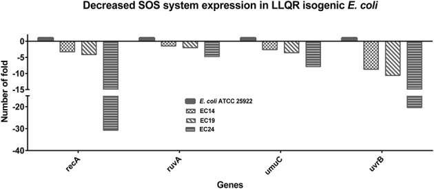 Impact on SOS response of low-level quinolone-resistant (LLQR) cells exposed to 1 μg/mL of ciprofloxacin, compared to wild-type cells in the same conditions. LLQR phenotypes: EC14 means E. coli ATCC 25922 pBK-QnrS1; EC19 means E. coli ATCC 25922 ΔmarR pBK-QnrS1; and EC24 means E. coli ATCC 25922 S83L pBK-QnrS1. All indicated genes shown a pattern of expression significantly different among LLQR strains and wild-type E. coli ( p -value
