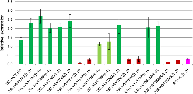 Detection of Arabidopsis AP1 expression by qRT-PCR in transgenic Arabidopsis lines ectopically expressing banana MaFT / TSF genes. The SAND (At2g28390) gene of Arabidopsis was used as reference gene.
