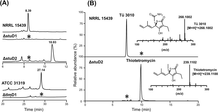 HPLC-UV, LC-ESI-HRMS and MS–MS analysis of P450 deletion mutants from both Tü 3010 and thiolactomycin (TLM) biosynthetic pathways. (A) HPLC trace profiles (UV 238 nm ) of extracts from S. thiolactonus wild-type strain NRRL 15439 and mutants ΔstuD1 and ΔstuD2, the Lentzea sp. wild-type strain ATCC31319 and ΔtlmD1 mutant. Separation was achieved as described in the materials and methods section. Production of Tü 3010 (retention time 8.39 min) was abolished in both P450 ( stuD1 and stuD2 ) mutants, although the ΔstuD2 mutant produced a new UV-absorbing peak (retention time 10.93 min). Thiolactomycin (retention time 27.14 min) production was lost, with no obvious new UV-absorbing peak, upon disruption of tlmD1 . (B) Further LC-ESI-HRMS analysis of the ΔstuD2 intermediate by selective ion monitoring confirmed it as thiotetromycin ( 2 ) (Fig. S20 † ). Asterisk denotes not detected.