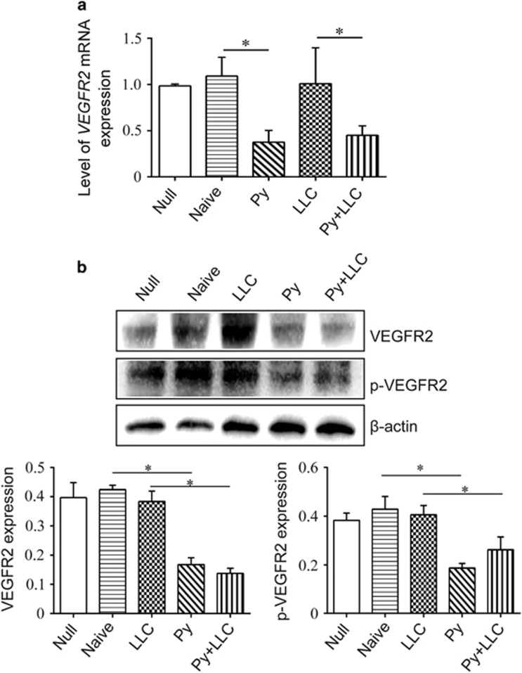 Exosomes inhibited vegfR2 expression in MS1 cells. ( a ) MS1 cells were cultured in vitro and exosomes were added in the culture medium for 24 h. VEGFR2 mRNA expression was detected using qPCR (* P