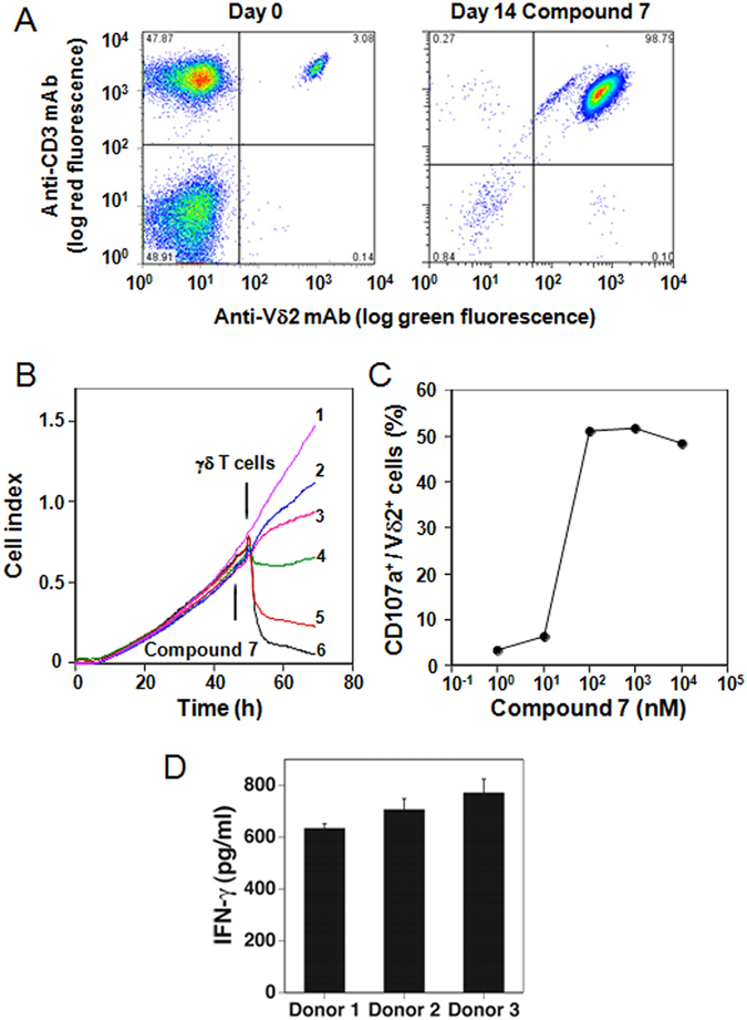 Selective activation of Vγ2Vδ2 T cells by compound 7 . ( A ) Selective expansion of Vγ2Vδ2 T cells from blood αβ and γδ T cells after culture with compound 7 . PBMC from a prostate cancer patient were stimulated with 1 μM compound 7 and IL-2. The two-color flow cytometric analysis of Vγ2Vδ2 T cells in PBMC before (left panel) and after (right panel) 10 day stimulation is shown. ( B ) Inhibition of EJ-1 bladder carcinoma cell growth by exposure to compound 7 and γδ T cells. Compound 7 was added to cultures of EJ-1 tumor cells followed by the addition of Vγ2Vδ2 T cell to some cultures16 h later. Cell growth was assessed in a real-time cell analyzer system. Culture conditions were: (1) 50 nM compound 7 + medium, (2) 0 nM compound 7 + γδ T cells, (3) 1.56 nM compound 7 + γδ T cells, (4) 12.5 nM compound 7 + γδ T cells, (5) 25 nM compound 7 + γδ T cells, (6) 50 nM compound 7 + γδ T cells. ( C ) Degranulation of γδ T cells in response to U937 histocytoma pretreated with compound 7 . The proportion of CD107a + degranulated Vδ2 + cells were plotted against the concentrations of compound 7 used for the pretreatment of U937 cells. ( D ) Stimulation of IFN-γ production by Vγ2Vδ2 T cells by compound 7 . PBMC from healthy donor were cultured with 1 μM compound 7 . After 48 h, the culture supernatants were removed and IFN-γ levels determined by ELISA.