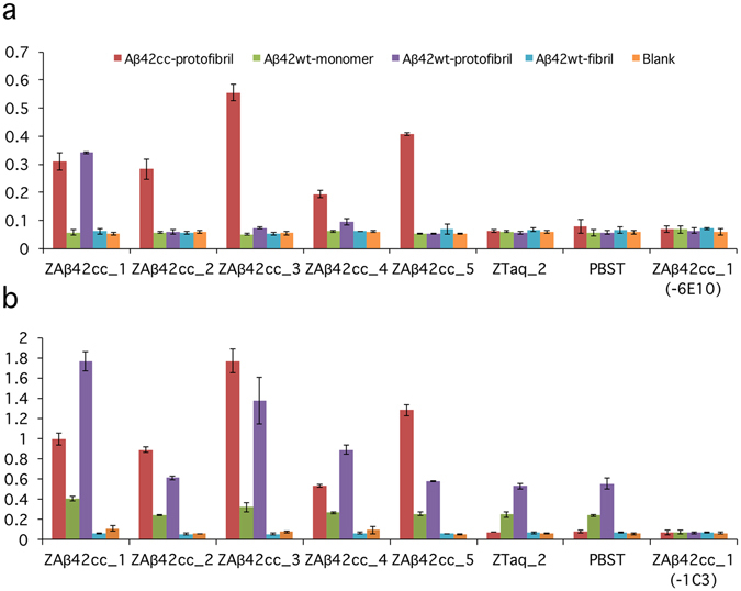 Binding profiling of five Affibody molecules to different Aβ aggregates, analyzed by ELISA. ( a ) Aβ 42 wt and Aβ 42 cc aggregates (50 nM assay concentration), bound to Affibody molecules, were detected by 6E10-HRP. 6E10 21 recognizes the N-terminus of Aβ. As expected, all five Affibody molecules show binding to Aβ 42 cc protofibrils. The Affibody molecule Z Aβ42cc_1 also binds to Aβ 42 wt protofibrils. No binding could be observed to either wild type monomer or fibrils. ( b ) Same as in ( a ), except that the assay concentration of Aβ 42 was 1 µM and mAb1C3 was used for detection (weakly specific for protofibrils 21 ). The binding profile has the same pattern as in ( a ) for protofibrils (both wt and cc) and Aβ 42 wt fibrils, but with a higher background for Aβ 42 wt protofibrils. ( a , b ) Two controls involve replacing the Affibody molecule with either an irrelevant Affibody molecule (Z Taq_2 ) or by PBS-T. In a third control experiment PBS-T was added instead of Aβ-specific antibody (6E10 or mAb1C3). Values are means of duplicate experiments.