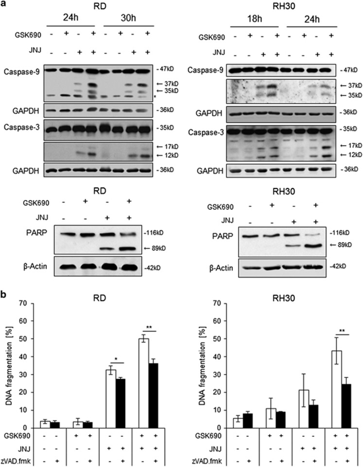 GSK690/JNJ-26481585 cotreatment induces caspase-dependent cell death. ( a ) Cells were treated for indicated times with 1 μ M GSK690 (RD cells) or 10 μ M GSK690 (RH30 cells) and/or 15 nM JNJ-26481585. Caspase-3 and caspase-9 cleavage was detected by Western blotting, cleavage products are indicated by arrows. GAPDH was used as loading control. Cells were treated with 1 μ M GSK690 (RD cells) or 10 μ M GSK690 (RH30 cells) and/or 15 nM JNJ-26481585 for 21 h (RD cells) or 15 h (RH30 cells). PARP cleavage was detected by Western blotting, the cleavage product is indicated by arrow; β-Actin was used as loading control. ( b ) Cells were treated for 72 h with 1 μ M GSK690 (RD cells) or 10 μ M GSK690 (RH30 cells) and/or 15 nM JNJ-26481585 in the presence or absence of 50 μ M zVAD.fmk. Cell death was determined by flow cytometric analysis of DNA fragmentation of PI-stained nuclei. Mean and SD of three independent experiments performed in triplicate are shown; * P