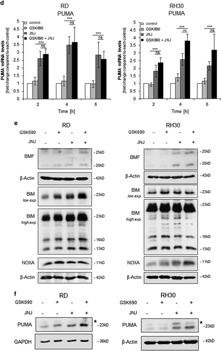 GSK690/JNJ-26481585 cotreatment alters the balance between pro- and antiapoptotic proteins. ( a-d ) Cells were treated for indicated times with 1 μ M GSK690 (RD cells) or 10 μ M GSK690 (RH30 cells) and/or 15 nM JNJ-26481585. Expression levels of BMF, <t>BIM,</t> NOXA, and <t>PUMA</t> mRNA were analyzed by qRT-PCR and fold changes relative to untreated control of each time point are shown with mean and S.D. of three independent experiments performed in duplicate; * P