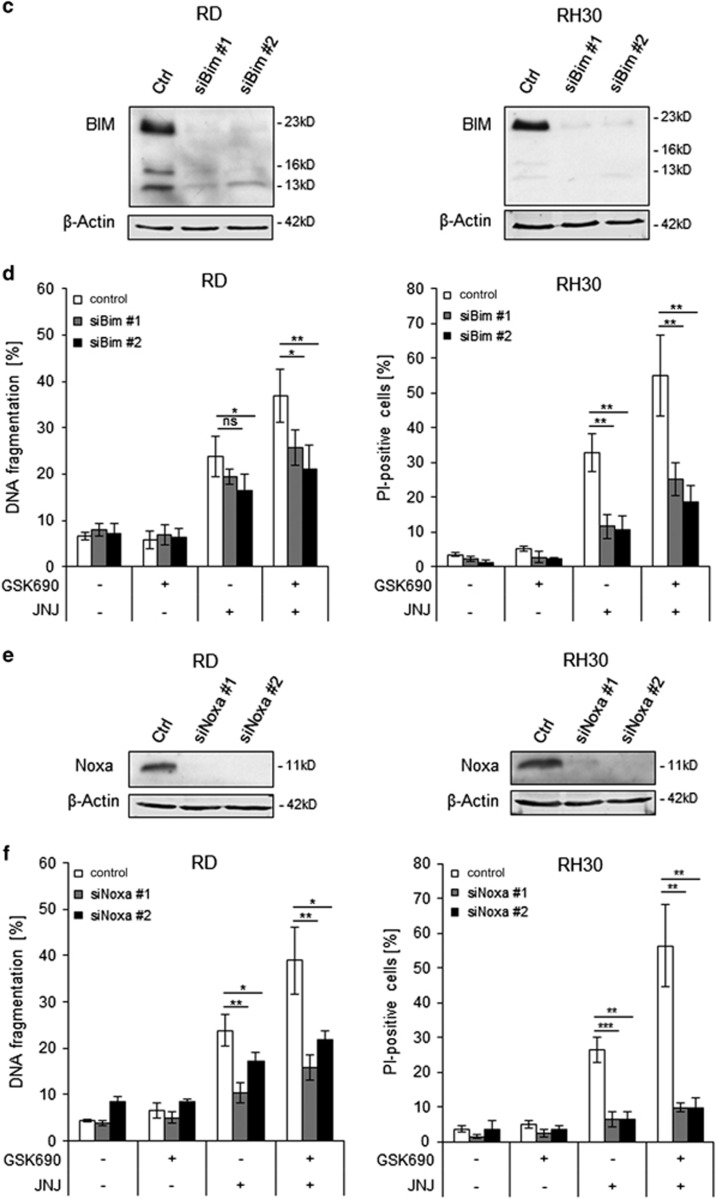 BMF, BIM and NOXA contribute to GSK690/JNJ-26481585-induced apoptosis. RD and RH30 were transiently transfected for 24 h with non-silencing siRNA or siRNA targeting BMF, BIM or NOXA mRNA. ( a, c,e ), BMF mRNA levels were assessed by qRT-PCR ( a ), BIM ( c ) and NOXA ( e ) protein levels were detected by Western blotting; β-Actin was used as loading control. ( b, d,f ), Cells were treated 24 h after transfection with 1 μ M GSK690 (RD cells) or 5 μ M GSK690 (RH30 cells) and/or 10 nM JNJ-26481585 for 72 h. Cell death was determined by flow cytometric analysis of DNA fragmentation of PI-stained nuclei (RD cells) or fluorescence-based microscope analysis of PI uptake using Hoechst 33342 and PI double staining (RH30 cells). In ( b, d,f ), mean and SD of three independent experiments performed in triplicate are shown; * P