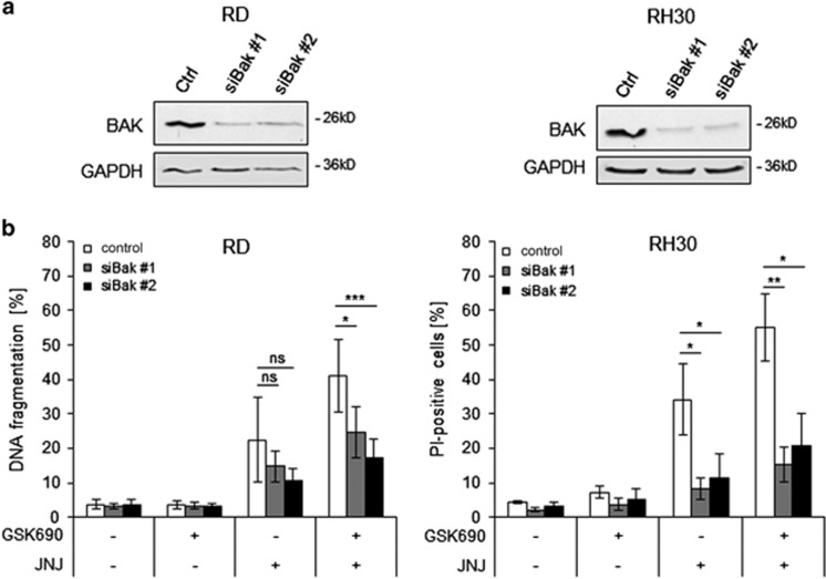 BAK contributes to GSK690/JNJ-26481585-induced apoptosis. RD and RH30 were transiently transfected for 48 h with non-silencing siRNA or siRNA targeting BAK. ( a ) Knockdown of BAK protein was detected by Western blotting, GAPDH served as loading control. ( b ) Cells were treated 48 h after transfection with 1 μ M GSK690 (RD cells) or 10 μ M GSK690 (RH30 cells) and/or 15 nM JNJ-26481585 for 72 h and cell death was determined by flow cytometric analysis of DNA fragmentation of PI-stained nuclei (RD cells) or fluorescence-based microscope analysis of PI uptake using Hoechst 33342 and PI double staining (RH30 cells). Mean and S.D. of three independent experiments performed in triplicate are shown; * P