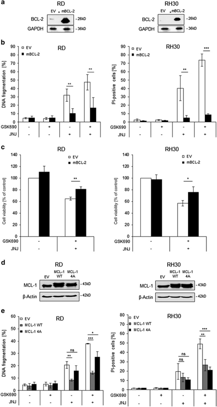 Overexpression of BCL-2 or MCL-1 reduces GSK690/JNJ-26481585-induced apoptosis. ( a ) RD and RH30 were transfected with empty vector (EV) or a vector containing a murine BCL-2 construct (mBCL-2). Expression of BCL-2 was assessed by Western blotting, asterisks indicate empty lanes. GAPDH was used as loading control. ( b ) Cells were treated with 1 μ M GSK690 (RD cells) or 5 μ M GSK690 (RH30 cells) and/or 15 nM JNJ-26481585 for 72 h. Cell death was determined by flow cytometric analysis of DNA fragmentation of PI-stained nuclei (RD cells) or fluorescence-based microscope analysis of PI uptake using Hoechst 33342 and PI double staining (RH30 cells). ( c ) Cells were treated with 1 μ M GSK690 (RD cells) or 10 μ M GSK690 (RH30 cells) and/or 15 nM JNJ-26481585 for 36 h (RD) or 24 h (RH30). Cell viability was assessed with MTT assay. ( d ) Cells were transfected with EV, wild-type MCL-1 (WT) or phospho-mutant MCL-1 (4A) constructs. Ectopic expression of MCL-1 constructs was detected by Western blotting, β-Actin served as loading control. ( e ) Transfected cells were treated with 1 μ M GSK690 (RD cells) or 5 μ M GSK690 (RH30 cells) and/or 15 nM JNJ-26481585 for 72 h. Cell death was determined by flow cytometric analysis of DNA fragmentation of PI-stained nuclei (RD cells) or fluorescence-based microscope analysis of PI uptake using Hoechst 33342 and PI double staining (RH30 cells). In ( b,c,e ) mean and S.D. of three independent experiments performed in triplicate are shown; * P