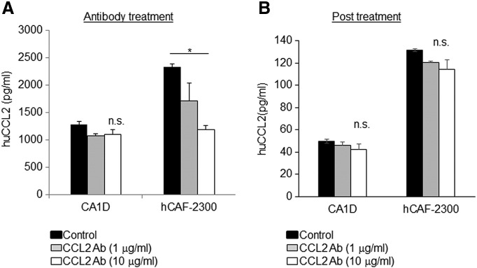 CCL2 levels in cultured cells are dependent on the presence of neutralizing antibodies. Cultured MCF10CA1d breast cancer cells or hCAF-2300 fibroblasts were treated with control IgG or CCL2-neutralizing antibodies for 24 hours. (A) Medium was analyzed for CCL2 expression by ELISA. (B). Cells were washed to remove antibodies and incubated in serum free condition medium for an additional 24 hours. CCL2 levels in conditioned medium were analyzed by ELISA. Statistical analysis was performed using one-way ANOVA test with Bonferonni post hoc comparison. Statistical significance was determined by P