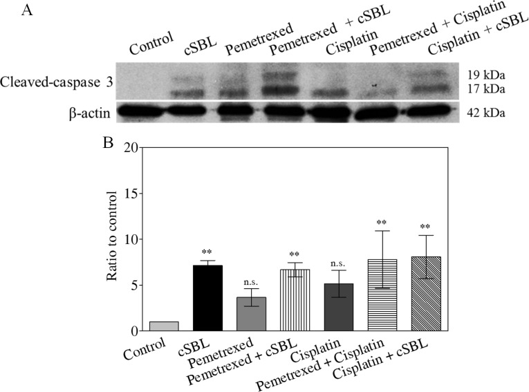 Caspase-3 activation is not enhanced by combination treatment Cells were treated with pemetrexed (20 μM), cisplatin (40 μM), or cSBL (1 μM) for 72 h. ( A ) Cleaved (activated) caspase-3 was detected using western blot analysis. ( B ) Caspase-3 activity was analyzed using a Caspase-Glo ™ 3/7 assay. * p