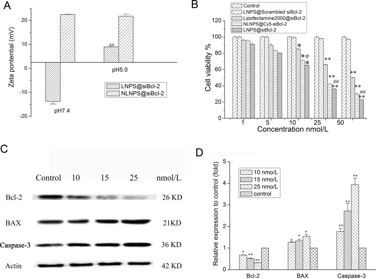 Effect of the medium pH on the zeta potential of LNPS@siBcl-2 (panel A ), and gene silencing effect of LNPS@siBcl-2 on A549 cells. (Panel B ) is the cytotoxicity of LNPS@siBcl-2 on A549 cells. (Panel C ) is the Western Blot analysis of Bcl-2, BAX and Caspase-3 on A549 cells. (Panel D ) is the statistic result of protein expression. Data are expressed as the mean ± SD, n = 3. * p