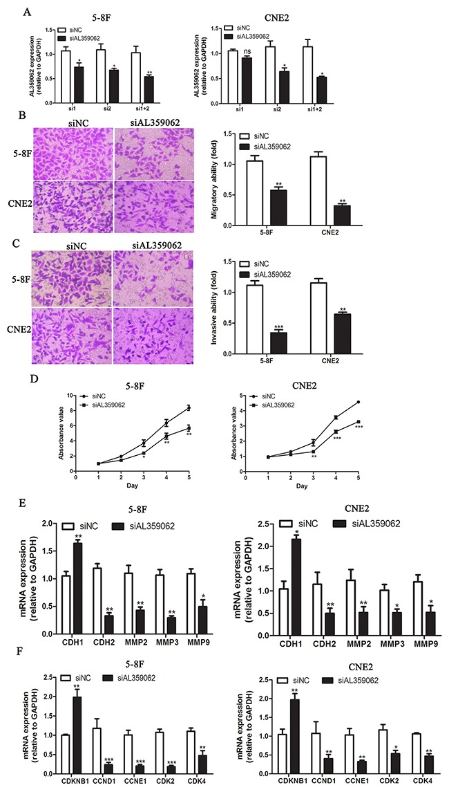 AL359062 knockdown suppress NPC cell metastasis, invasion and proliferation in vitro (A) . siRNA1+2 efficiently suppressed AL359062 expression compared with the siNC in 5-8F and CNE2 cells by qRT-PCR. (B-C) . AL359062 knockdown inhibited NPC cell migratory and invasive abilities as measured by transwell migration assay (B) and matrigel invasion assay (C). (D) . CCK-8 assay was applied to detect the effect of AL359062 knockdown on NPC cell viability. (E-F) . Forty-eight hours after AL359062 knockdown, total RNA was extracted and mRNA expression levels of metastasis and invasion-related genes CDH1, CDH2, MMP2, 3 and 9 (E), and cell cycle-related genes CDKN1B, CCND1, CCNE1, CDK2 and 4 (F) were measured by qRT-PCR. The graph summarizes the data from three independent experiments. (* p