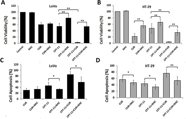 Anti-colorectal cancer effects of curcumin and/or irinotecan are dependent on ROS ( A , B ) The effects of NAC on cell growth inhibition induced by curcumin and/or irinotecan. After pretreatment with 5 mM NAC for 2 h, LoVo cells (A) or HT-29 cells (B) were treated with curcumin and/or irinotecan for 24 h, then cell viability was assessed by CCK-8 assay. ( C , D ) The effects of NAC on apoptosis induced by curcumin and/or irinotecan. After cells were treated as described above, cell apoptosis was measured by Annexin V-FITC/PI staining. Values are means ± SEM. *