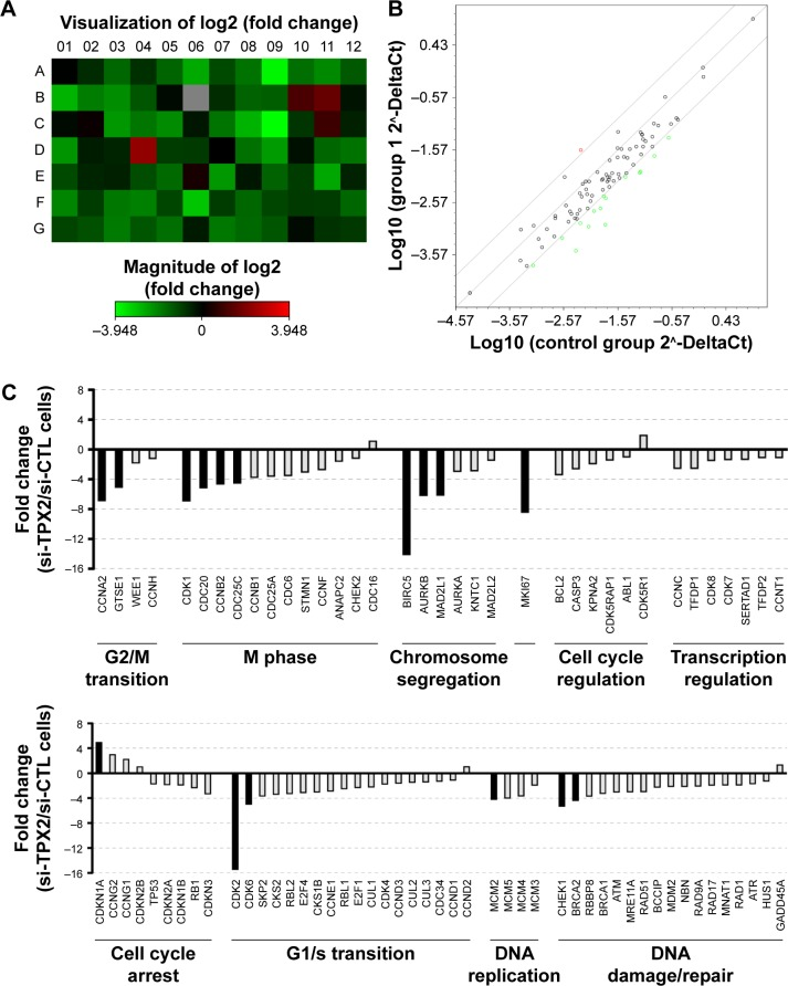 Depletion of TPX2, as reflected by changes in cell cycle regulation. Notes: ( A ) Graphical representation of a heat map showing fourfold gene expression changes in TPX2-depleted PPC1 cells. ( B ) Scatter plot analysis of gene expression changes; specifically, 1 gene was upregulated (red circle) and 15 genes were downregulated (green circles). ( C ) Fold change of normalized expression between scrambled siRNA and the siRNA oligo pool-transfected PPC1 cells that were analyzed using pathway-focused validated qPCR arrays; notably, downregulation of genes is associated with cell cycle progression and proliferation in conjunction with the upregulation of growth inhibitory genes. Abbreviations: qPCR, quantitative polymerase chain reaction; si-CTL, small interference-negative control.