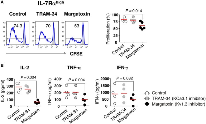 Requirement of Kv1.3 for effector memory (EM) CD8 + T cell proliferation and interleukin (IL)-2 production. (A) Freshly sorted IL-7Rα high EM CD8 + T cells were labeled with <t>carboxyfluorescein</t> diacetate (CFSE) and stimulated for 6 days with anti-CD3/CD28 antibodies (Abs) in the presence or absence of potassium channel inhibitors such as TRAM-34 (KCa3.1 inhibitor, 5 µM) and margatoxin (Kv1.3 inhibitor, 5 nM), and their proliferation was measured by flow cytometry. Representative histograms and a quantification graph showing proliferating cells are shown. (B) Quantification of cytokines in culture supernatants from IL-7Rα high EM CD8 + T cells that were stimulated for 24 h with anti-CD3/CD28 Abs in the presence or absence of potassium channel inhibitors using a multiplex cytokine assay. Bars indicate the mean. The results are representative data from two or three independent experiments. Bars represent the mean, and p -values were obtained using the paired two-tailed Student's t -test.