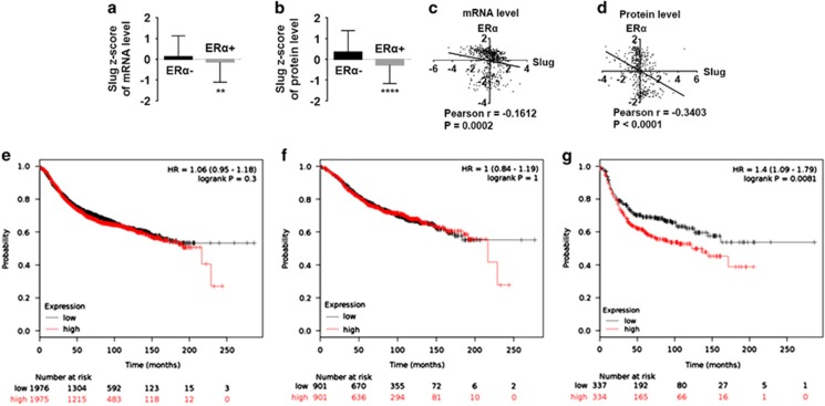 Negative correlation between Slug and ERα expression exists in human breast cancer tissues, and high Slug mRNA expression is correlated to poorer RFS in ERα-negative breast cancer patients. ( a , b ) Correlation of Slug mRNA ( a ) and protein ( b ) levels in ERα-negative and -positive breast cancer patients with z -score analysis. ( c , d ) Slug and ERα correlation analysis in z -scores of mRNA level ( c ) and protein level ( d ) is performed by two-tailed Pearson's R tests. Z -scores of Slug and ERα are directly obtained from the online data ( www.cbioportal.org ). The formula is: z =(expression in tumor sample−mean expression in reference sample)/s.d. of expression in reference sample. ( e – g ) The prognostic effect of Slug mRNA is obtained from the website: www.kmplot.com . Survival curves are plotted for all patients ( n =3951) ( e ) for ERα-positive cancers ( n =1802) ( f ) and for ERα-negative cases ( n =671) ( g ). Statistical analysis is performed using GraphPad Prism version 7.0 (GraphPad Software Inc., San Diego, CA, USA). * P