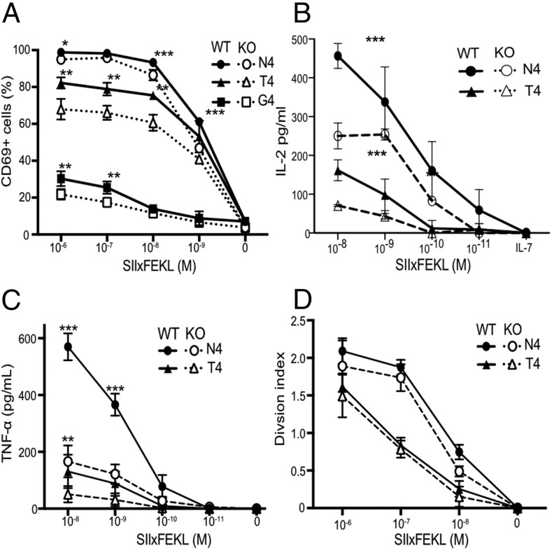 Cav1 regulates CD8 T cell responses to Ag. ( A ) The frequency of CD69 + cells among Cav1-WT and Cav1-KO OT-1 CD8 T cells stimulated for 3 h with a titration of N4, T4, or G4 peptides. ( B and C ) Cav1-WT and Cav1-KO OT-1 CD8 T cells were stimulated and supernatants were assayed at 24 h for total IL-2 (B) and TNF-α (C) by ELISA. ( D ) Proliferation at 72 h of CTV-labeled OT-1 T cells is represented by the division index calculated using FlowJo software. Data are representative of two independent experiments, each performed on three mice per group. Error bars represent SD. * p ≤ 0.05, ** p ≤ 0.01, *** p ≤ 0.001 (Student t test, corrected for multiple comparisons using the Holm–Sidak method).