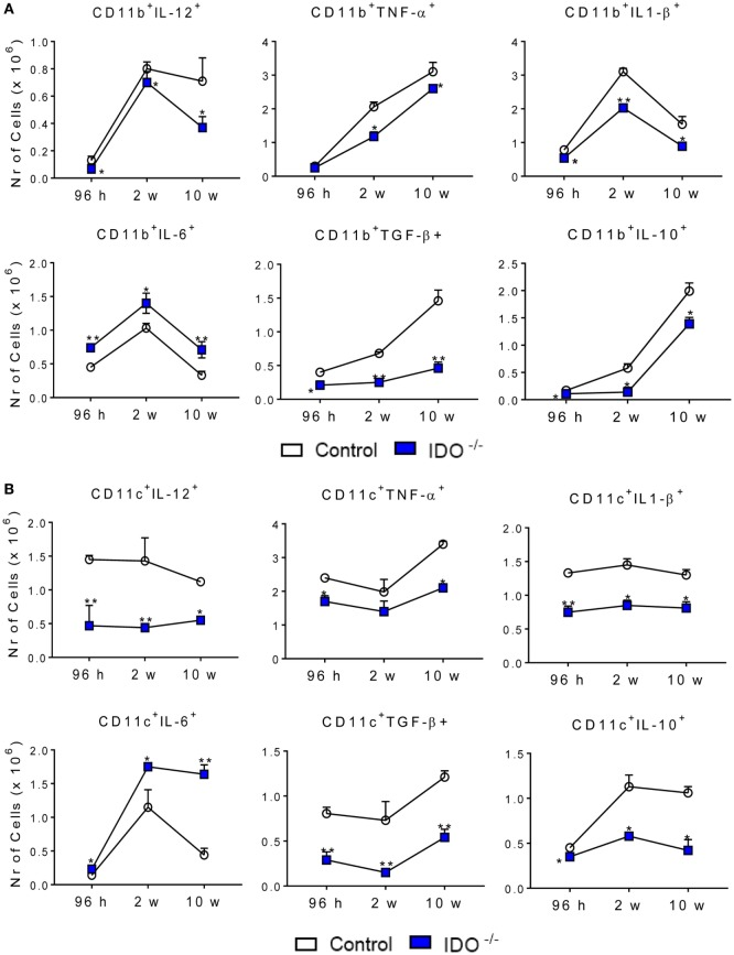 """Indoleamine 2,3 dioxygenase-1 (IDO1) expression controls the presence of intracellular cytokines in pulmonary CD11b + and CD11c + cells. The intracellular cytokines were determined in CD11b + (A) and CD11c + (B) lung infiltrating leukocytes of wild-type and IDO1 −/− C57BL/6 mice after 96 h, 2, and 10 weeks of infection with 1 × 10 6 Paracoccidioides brasiliensis yeasts. The lung cells were obtained as described in Section """" Materials and Methods """" and labeled with antibodies conjugated to different fluorochromes. The lung infiltrating leukocytes were gated by FSC/SSC analysis. The cells were gated for CD11b + or CD11c + expression and then for the presence of cytokines IL-12, TNF-α, IL-1β, IL-10, IL-6, and TGF-β. One hundred thousand cells were acquired on FACS CANTO II and subsequently analyzed by FlowJo software. Data are expressed as means ± SEM and are representative of three independent experiments using five mice of each mouse strain per group (* p"""