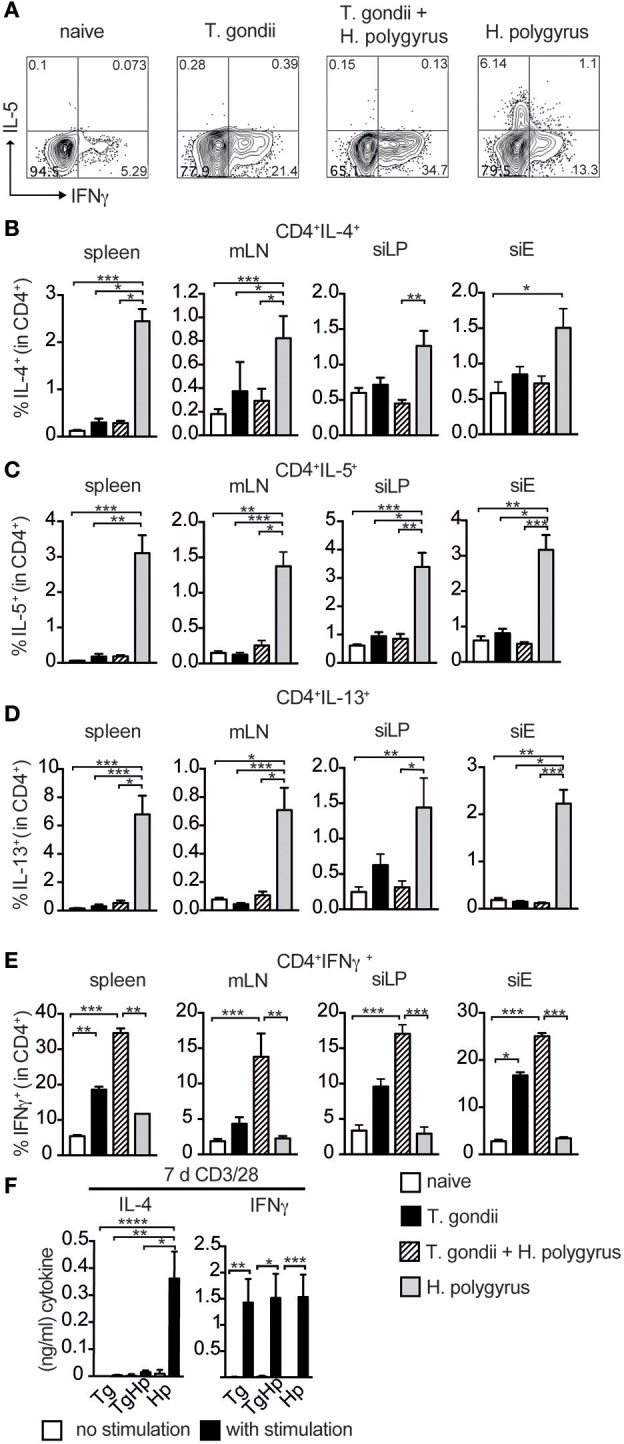 Th2 but not Th1 immune responses are absent in co-infected mice. Cells from spleen, mLN, siLP, and siE of single and co-infected animals were isolated and stimulated with PMA and ionomycin in the presence of Brefeldin A followed by intracellular cytokine staining. Gating strategy for the cytokines IL-5 and IFN-γ in CD4 + cells isolated from spleen (A) . Bar graphs showing frequencies of CD4 + T cells expressing IL-4 (B) , IL-5 (C) , IL-13 (D) , and IFN-γ (E) in spleen, mLN, siLP, and siE. (F) IL-4 and IFN-γ production detected by ELISA in supernatant from 3 × 10 5 splenocytes stimulated with (black bars) and without (white bars) anti-CD3/CD28 antibodies. (B–F) Data shown as mean ± SEM, pooled from two independent experiments with n = 8–9 Statistical analysis was performed using the Kruskal-Wallis with Dunn's multiple comparison test, * P ≤ 0.05, ** P ≤ 0.01, and *** P ≤ 0.001.