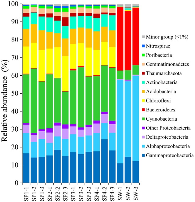 Taxonomic abundance of microbial reads in sponges and seawater at the phylum level. Microbial reads of 16S rRNA gene amplicons were assigned taxonomically using the RDP classifier against the SILVA 111 database with a confidence threshold of 50%. Sample IDs are referred to Table 1 .