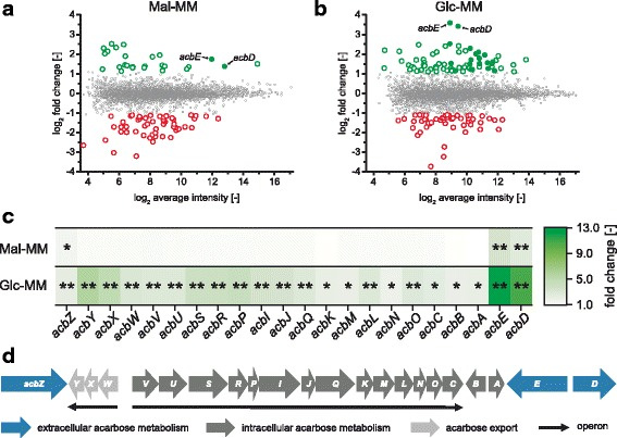 Differential transcriptional analysis of the deletion mutant Δ acrC compared to the wild type. a Ratio/intensity plot from whole genome microarrays of the strain Actinoplanes sp. SE50/110 Δ acrC compared to the Actinoplanes sp. SE50/110 wild type grown in maltose minimal medium (Mal-MM). Green and red dots represent genes with significantly different transcript levels in the Δ acrC strain. Filled dots show acb genes. b Ratio/intensity plot from whole genome microarrays of the strain Δ acrC compared to the wild type grown in glucose minimal medium (Glc-MM). c Heatmap of the fold change of transcript abundance for the genes of the acb gene cluster, derived from the microarray data shown in 2A and 2B. Significance of p