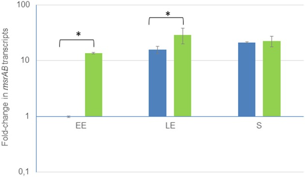 Growth phase-dependent changes of msrAB transcript levels in wild-type (blue) and complemented Δ msrAB /pHT304 msrAB (green) strains. Fold changes refer to the levels observed in early exponential (EE) phase cultures of the WT strains. Significant differences are indicated with one ( p