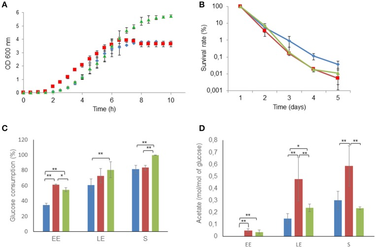 Altered growth and long-term survival of Δ msrAB mutant cells and complemented Δ msrAB /pHT304 msrAB cells. (A) Growth curves of WT (blue), Δ msrAB (red) and Δ msrAB /pHT304 msrAB (green) cells in pH-regulated batch cultures under aerobiosis. (B) Long-term survival of WT (blue), Δ msrAB (red) and Δ msrAB /pHT304 msrAB (green) cells after growth under aerobiosis. (C) Glucose consumption of WT (blue), Δ msrAB (red) and Δ msrAB /pHT304 msrAB (green) cells. (D) Acetate production of WT (blue), Δ msrAB (red) and Δ msrAB /pHT304 msrAB (green) cells. Significant differences are indicated with one ( p