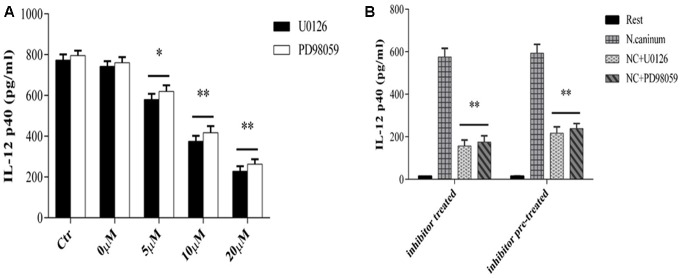 U0126 and PD98059 inhibit IL-12 production by macrophages infected with N. caninum. (A) PMϕ were infected with N. caninum -1 tachyzoites at a MOI of 10 in the presence or absence (Ctr) of UO126 and PD98059 (0–20ìM, 0ìM was treated with same amount of DMSO), respectively, in DMEM with 1% FBS at 37°C for 24 h. (B) PMϕ were incubated with U0126 and PD98059 with 20 μM for 1 h, respectively. Ctr was incubated with same amount of DMSO. Then after the inhibitor or DMSO was washed off (pre-treatment) or not (treatment), PMϕ were infected with tachyzoites at a MOI of 10 for 24 h at 37°C. Samples were applied in triplicates for ELISA assay and data are expressed as the mean of three independent experiments ± SEM. ∗ P