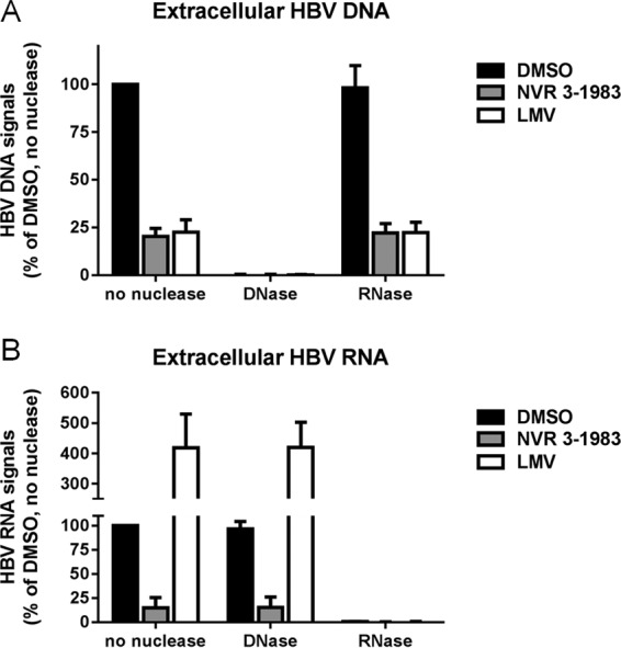 Effect of nuclease treatment on extracted HBV DNA and RNA from the supernatant of infected HepaRG cells treated with HBV inhibitors. Cells were incubated with DMSO or 30 μM NVR 3-1983 or LMV for 6 days. HBV DNA and RNA from culture supernatants were extracted and treated with DNase or RNase, prior to quantitative assays. Extracellular HBV DNA (A) and HBV RNA (B) levels were normalized to those for DMSO-treated samples without nuclease treatment. Results and error bars represented means and standard deviations from at least three independent experiments, respectively.