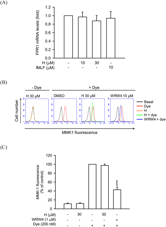 Honokiol does not alter FPR1 mRNA expression and FPR2 binding effect in human neutrophils. ( A ) Human neutrophils were treated with 0.1% DMSO (as control), honokiol (10 and 30 μM), or fMLF (10 μM) at 4 °C for 30 min. Total RNAs were isolated with Trizol reagent and FPR1 mRNA levels were analyzed by quantitative PCR. ( B ) Human neutrophils were incubated with 0.1% DMSO (as control), honokiol (H; 10 μM), or WRW4 (1 μM) for 10 min and then labelled with FPR2-specific fluorescent ligand MMK-1F (200 nM) for 15 min. Representative histograms showing typical fluorescence in the absence or presence of MMK-1F with honokiol or WRW4. ( C ) Mean fluorescence intensity of ( B ) is shown. All data are expressed as the mean ± S.E.M. ( n = 3 or 4). *** P