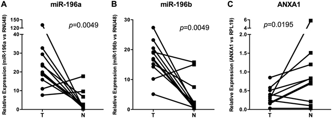 Analysis of miR-196a and miR-196b expression and ANXA1 mRNA levels in HNSCC tissue specimens. ( A ) miR-196a and ( B ) miR-196b expression levels were quantified by RT-qPCR in 11 fresh primary tumors (T) and patient-matched normal epithelia (N). Data were normalized to RNU48 levels, and relative to the normal mucosa from non-oncologic patients. ( C ) ANXA1 mRNA levels were quantified by RT-qPCR and data normalized to RPL19 levels. p -values obtained from the Wilcoxon test provided statistical confirmation of the significant changes.