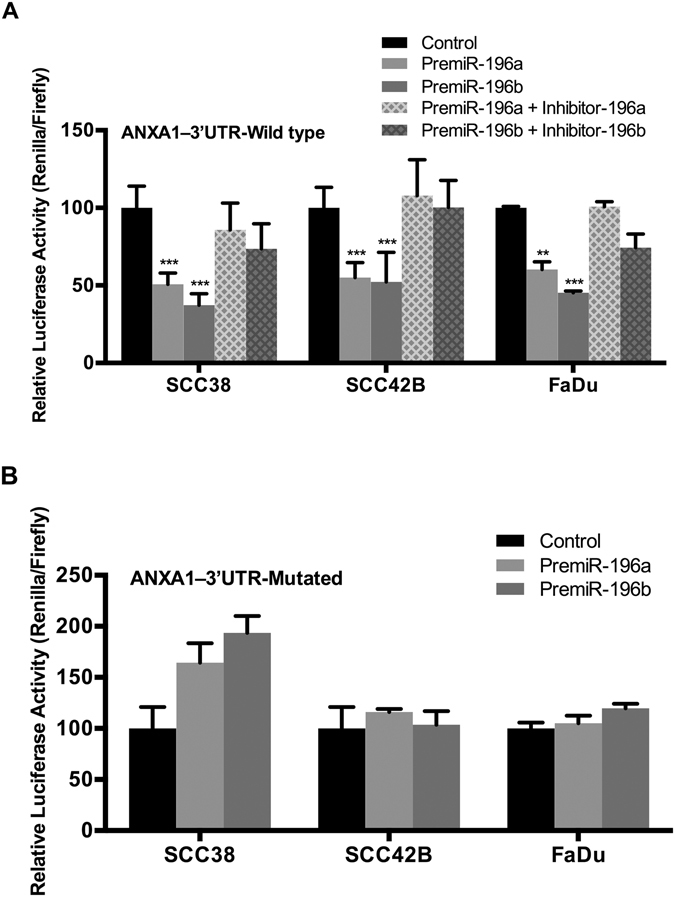 ANXA1 is directly targeted by both miR-196a and miR-196b in HNSCC cells. The constructs psi-CHECK-2-ANXA1–3′UTR-wt ( A ) and psi-CHECK-2-ANXA1–3′UTR-mut ( B ) were co-transfected with the indicated specific premiR precursors and miRNA inhibitors into SCC38, SCC42B, and FaDu cells. Renilla luciferase activity under the control of ANXA1 3′-UTR was measured and normalized to firefly luciferase, relative to control-transfected cells. The graphs represent the mean percentage ± SD, calculated from at least three independent experiments performed in quadruplicate. *p