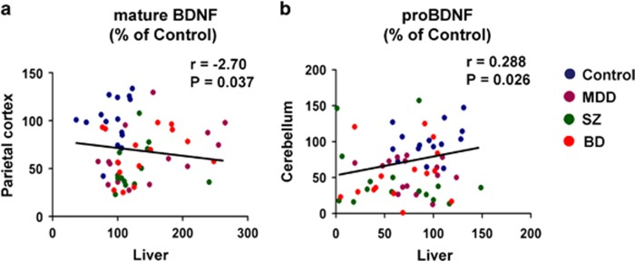 Correlation between mature BDNF (or proBDNF) in the brain and liver. ( a ) There was a negative correlation ( r =−2.70, P =0.037) between mature BDNF in the parietal cortex and mature BDNF in the liver in all the subjects ( N =60). ( b ) There was a positive correlation ( r =0.288, P =0.026) between proBDNF in the cerebellum and proBDNF in the liver in all the subjects ( N =60). BD, bipolar disorder; BDNF, brain-derived neurotrophic factor; MDD, major depressive disorder; SZ, schizophrenia.