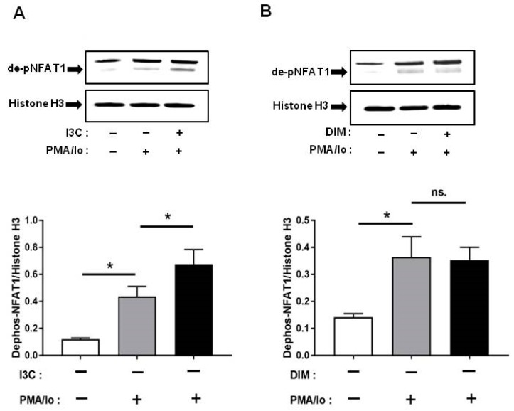 Effects of I3C, DIM on nuclear factor of activated T-cells 1 (NFAT1) dephosphorylation in Jurkat cells. Jurkat cells were treated with 50 μM of I3C or 10 μM of DIM for 48 h and then stimulated with PMA+ionomycin for 10 or 30 min. Nuclear extracts were prepared following cell harvest and dephosphorylation of NFAT1 was analyzed by western blot in: ( A ) I3C-pretreated cells; and ( B ) DIM-pretreated cells. Protein expression was normalized to levels of housekeeping gene (Histone H3). The inset shows representative Western blots. Results expressed as mean ± SD ( n = 3). * indicate significantly different from control at p