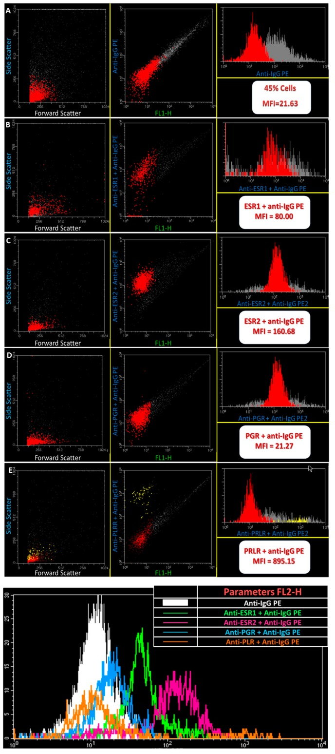 Flow cytometry analysis of gated cells of IGS. Examples of gated and dot plots and histograms showing the expression of ESR1, ESR2, PLRL and PGR. Shown flow cytometry data depict a positive cell expression towards the receptors under evaluation.