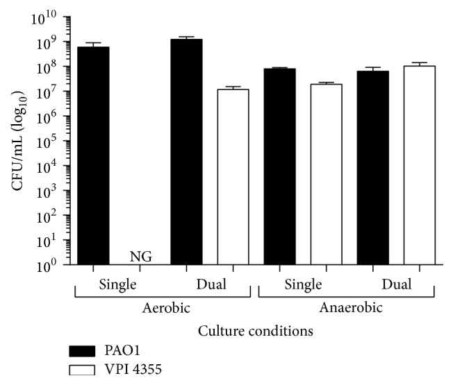 P. aeruginosa supports the growth of F. nucleatum under aerobic conditions. P. aeruginosa strain PAO1 and F. nucleatum strain VPI 4355 were inoculated into BHI broth individually or in coculture and incubated at 37°C under aerobic or anaerobic conditions. The number of CFU/mL was determined. Values represent the means of three independent experiments ± SEM.