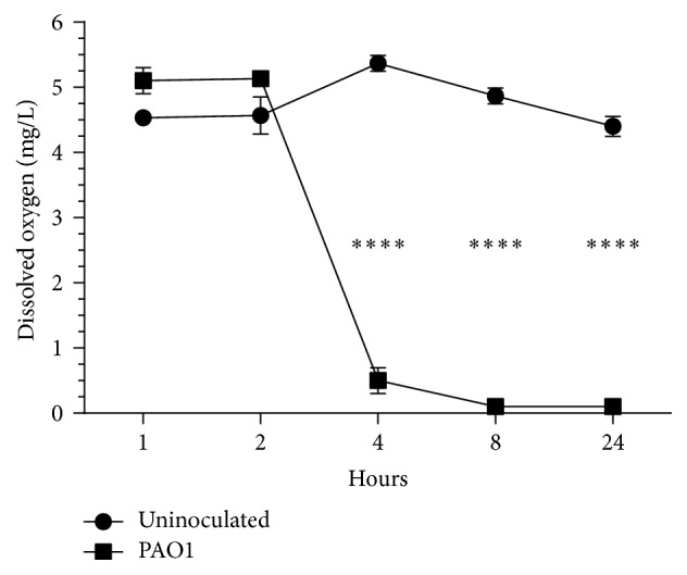 Growth of P. aeruginosa creates anaerobic conditions within 4 h of inoculation. Fifty mL tubes of BHI broth were left uninoculated or inoculated with 10 6 CFU PAO1 and incubated for 24 h at 37°C. Levels of DO 2 were measured at times indicated. Values represent the means of three independent experiments ± SEM; ∗∗∗∗ P