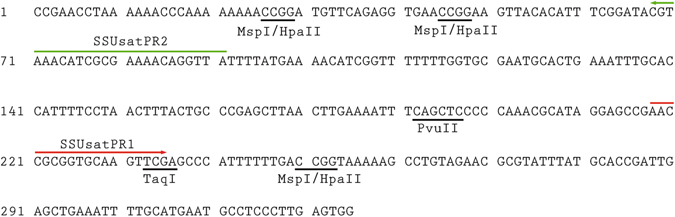 Consensus sequence of the SSUsat monomers from Spisula subtruncata . On the basis of the DNA sequences of the recovered SSUsat monomers from Spisula subtruncata genome, a consensus sequence was derived. Restriction sites for <t>Msp</t> I/ <t>Hpa</t> II, Pvu II and Taq I are underlined. Green and red arrows indicate the positions of PCR primers used for SSUsat amplification in related species.